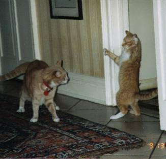 karatecat copy